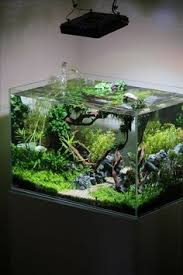 Asian Themed Fish Tank Decorations Omgggg I Just Want A Tank Elusive For Plants This Is Awesome