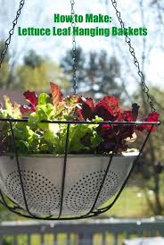 364 best the illusive green thumb images on pinterest gardening