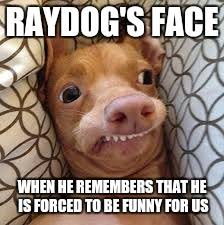 Dumb Face Meme - dumb dog latest memes imgflip