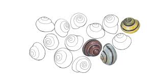 bbc earth how do snails cope with the winter freeze