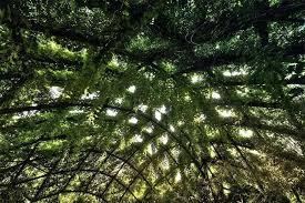 indoor hanging garden u2013 exhort me
