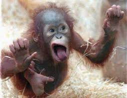 Monkey Face Meme - funny faces pictures funny monkey face