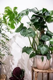 947 best garden and indoor green images on pinterest plants