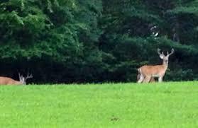 july 2013 big deer