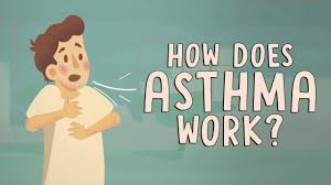 how does asthma work christopher e gaw youtube