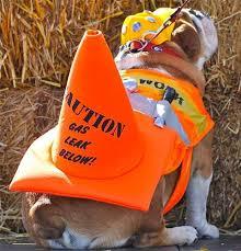 best 25 bulldog costume ideas on pinterest bulldog halloween