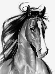 mustang horse drawing horse at play by jasminasusak on deviantart