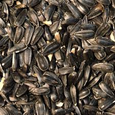 sunflower black oil seed green cover seed
