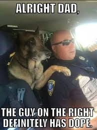 Law Enforcement Memes - 30 memes of dogs hard at work homes for heroes