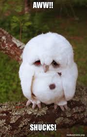 Aww Shucks Meme - aww shucks sad owl make a meme