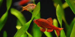 easy schooling fish the aquarium guide