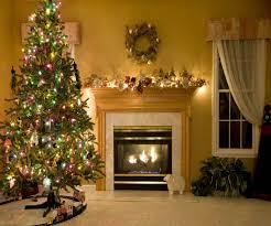 live potted christmas trees sydney best images collections hd