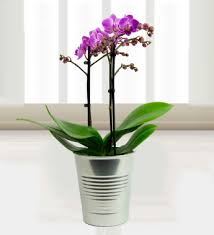 orchids care how to care for your potted orchids flower pressflower press