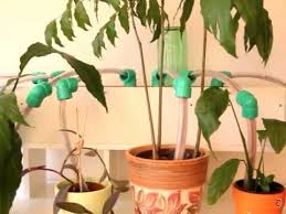 self watering plants cheap and practical diy self watering system for plants video