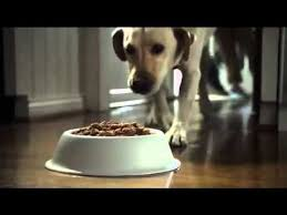 purina light and healthy purina dog chow light healthy tv commercial youtube