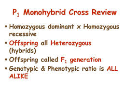 intro to mendelelian genetics ppt video online download
