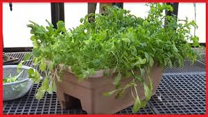 Gardening For Beginners Vegetables by Vegetable Container Gardening For Beginners Discover Basics