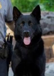 belgian shepherd oklahoma oklahoma k 9 cop slain in the line of duty gets full police