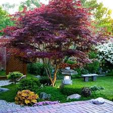best tree to plant in front yard best small trees ideas on evergreen