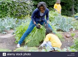 us first lady michelle obama hosts a fall harvest of the white
