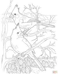desert cardinals coloring page free printable coloring pages