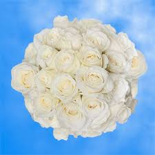 Global Roses Pure White Roses For Bridal Bouquets Sugar Doll Roses Global Rose