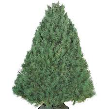 types of real trees the home depot
