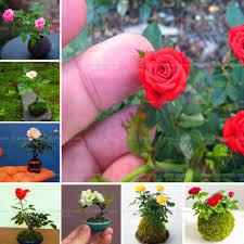online buy wholesale mini plant pots from china mini plant pots