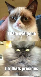 Colonel Meow Memes - colonel meow is not amused by donleroy meme center