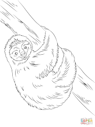 sloth coloring pages amazing baby otter coloring page with sloth