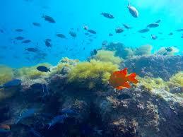 California snorkeling images La jolla cove snorkel tour la jolla kayak png