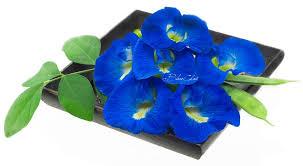 blue flower butterfly pea tea color changing blue tea asian pigeonwing tea