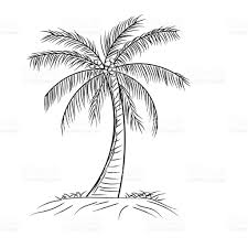 palm tree coconut with leaves style design in outline