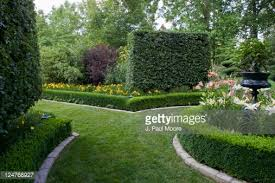 Louisville Botanical Gardens by Spiral Trimmed Spruce Topiary Louisville Ky Usa Stock Photo