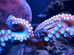 octopus ventures techcrunch