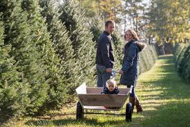 finding the perfect pine at a christmas tree farm angie u0027s list