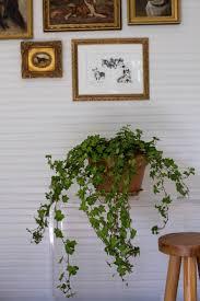 best house plants 51 best indoor plants images on pinterest a dog architecture