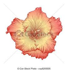 gladiolus flower gladiolus flower vector beautiful colored gladiolus clipart