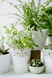 Potted Plants Wedding Centerpieces by 18 Best Potted Plants Images On Pinterest Gardening Flowers And