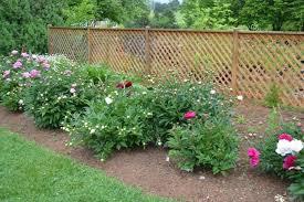 incorporating ornamental vegetables into your flower garden