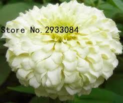 Cheap Flower Seeds - online get cheap flower seeds calendula aliexpress com alibaba