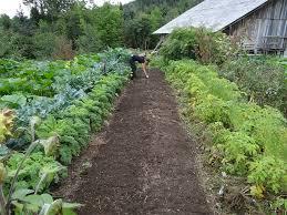 vegetable gardening productive tips for beginners