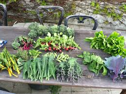 Make A Vegetable Garden by Why Grow Your Own 12 Reasons To Plant A Vegetable Garden Hope