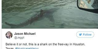 fake jeep meme hurricane harvey that shark photo is fake and fueling a problem