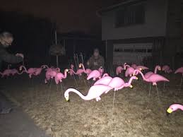 Flamingos In Front Yard For My Sister U0027s Birthday