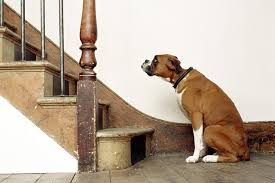 Leg Pain Going Down Stairs by Is Your Dog Afraid Of Stairs