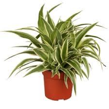 pflanzen für schlafzimmer welche pflanzen sind für das schlafzimmer besonders geeignet
