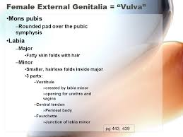 hairless pubis pelvis and contents reproductive organs ppt video online download