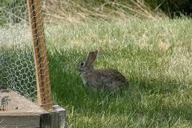 rabbit garden rabbit proof garden fencing lovetoknow