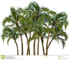 group of palm trees on white background stock photo image 30285990